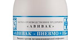 Авивак