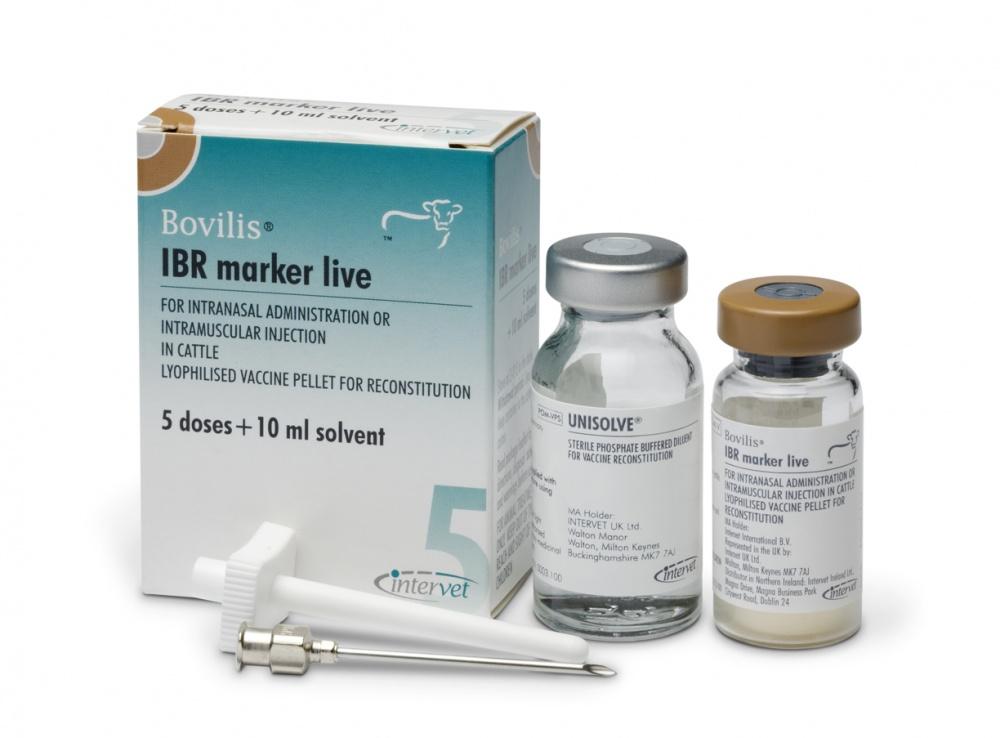 Бовилис IBR