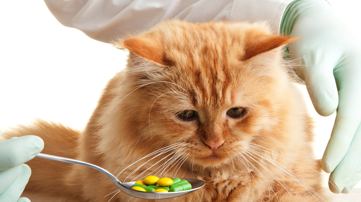 Трансдермальные лекарства: ветеринария на рубеже новой эпохи