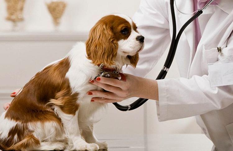 Корма-холистики для собак: рациональное питание или вред?