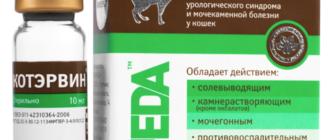 КотЭрвин