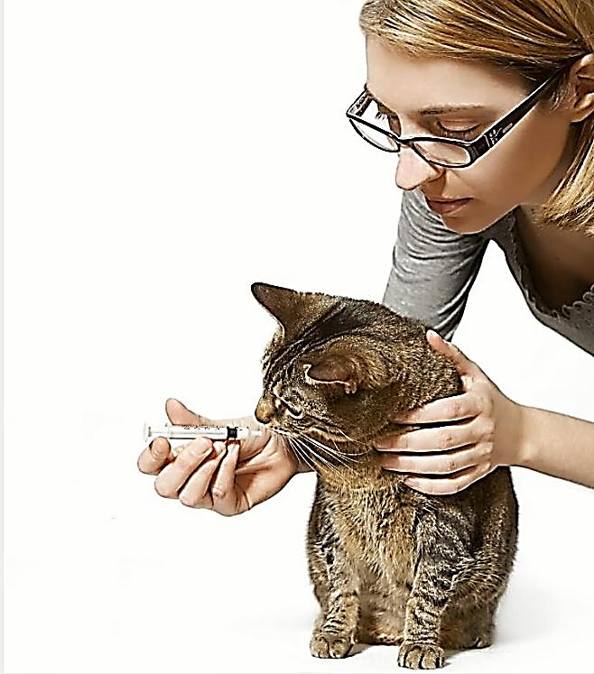 Кошке дают Локсиком