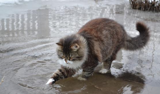 В грязной луже кишат амебы