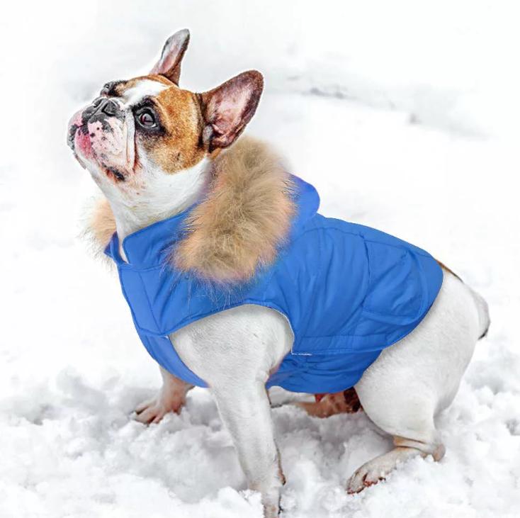 На заболевшую декоративную собачку в зимнее время надевают комбинезон
