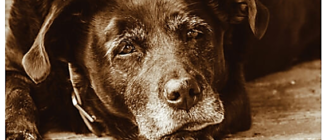 При атонии кишечника собака угнетена