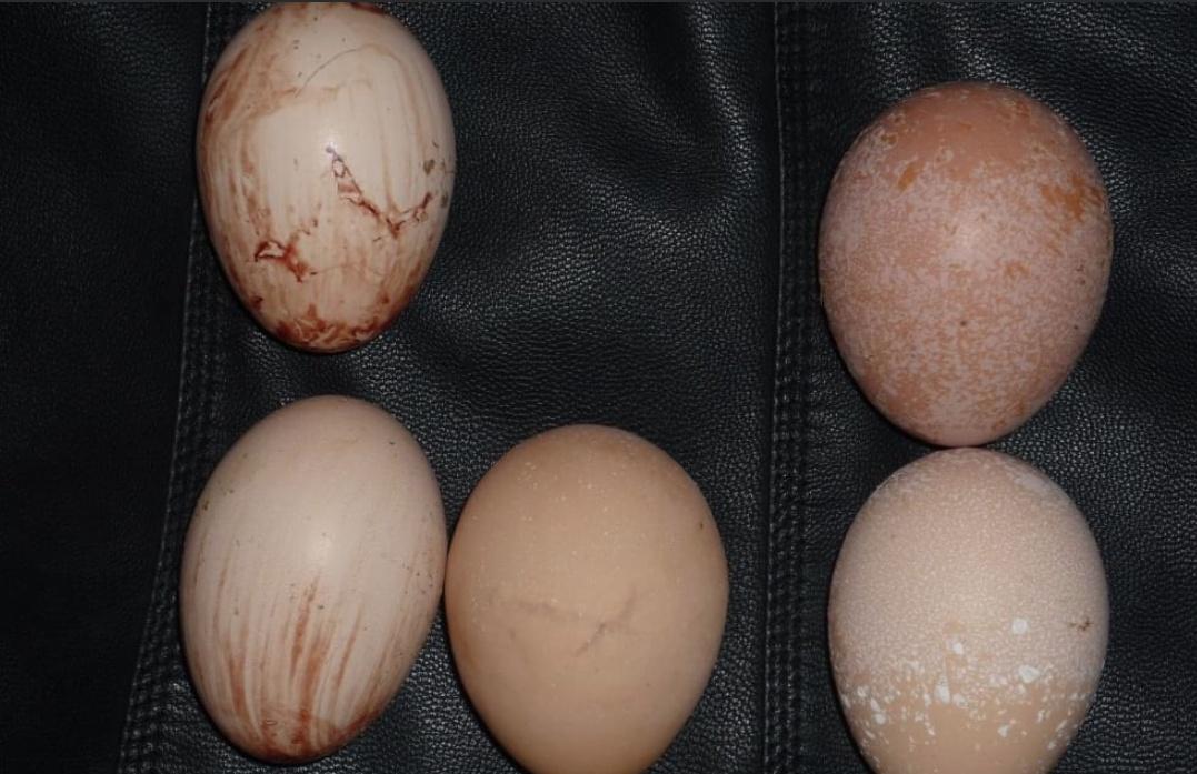 Такие яйца несут куры с воспаленным яйцеводом