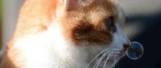 Гайморит характеризуется истечениями из одной ноздри
