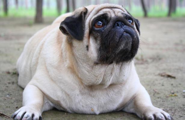 При гипертиреозе возникает ожирение и пучеглазие