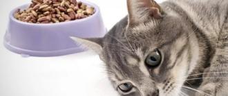 При гастрите кошка отказывается от корма