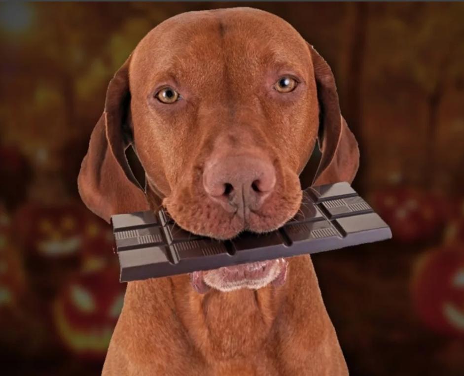 Частое угощение шоколадом приводят к гипогликемии