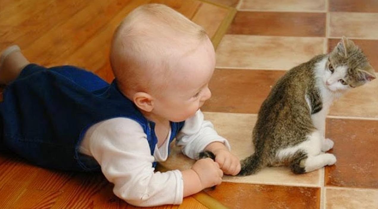 Неосторожное обращение детей с котятами приводит к вывихам