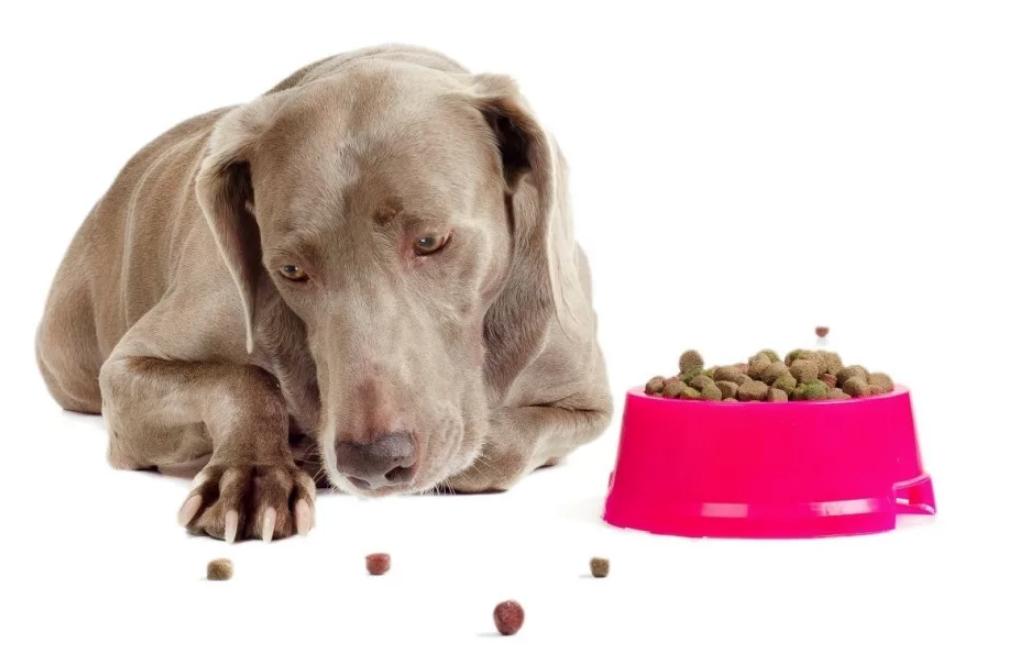 При гемобартонеллезе у собаки пропадает аппетит