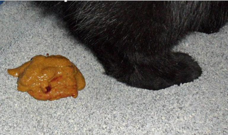 У котенка понос
