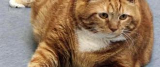 К инфаркту предрасположены старые ожиревшие коты