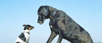 Собак нужно ограждать от стрессовых ситуаций