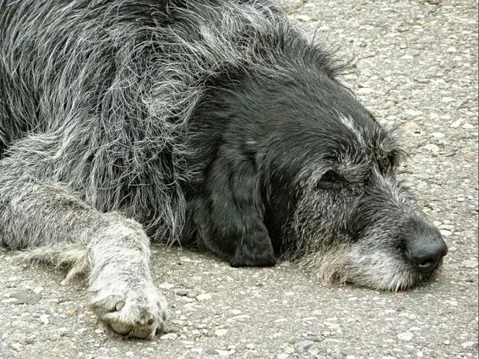 Старые собаки предрасположены к запору
