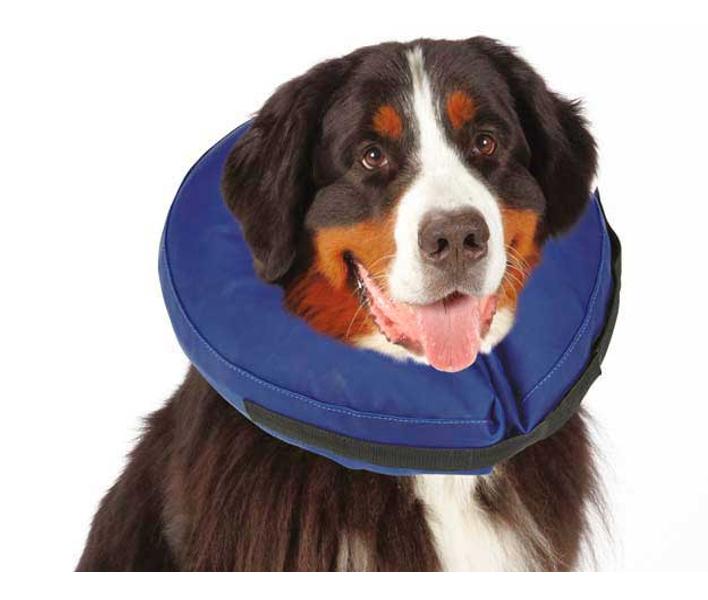 Чтобы собака не высасывала саму себя, надевают шейный воротник